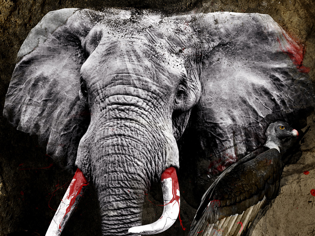 le-dernier-des-elephants